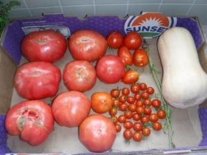 tomatoes, from fraction of an ounce to more than a pound